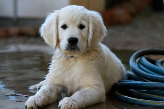 Image Result For Puppys In