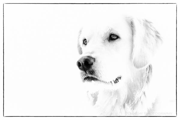 Black and White Sunday: Sasha's WhiteMagic