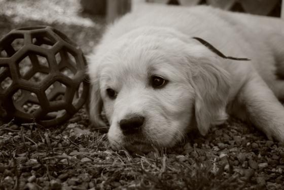 Cute5