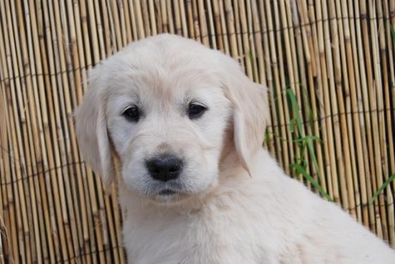 Puppy Fix101