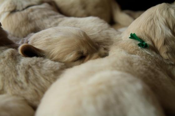 Puppy Fix14