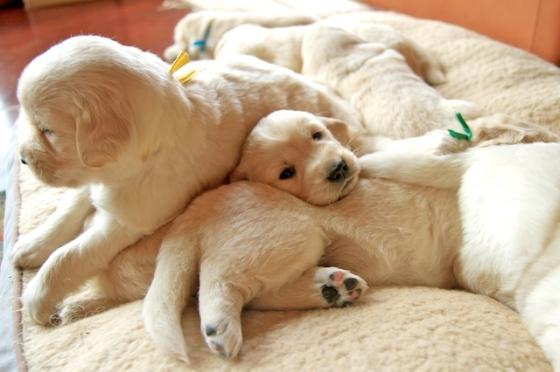 Puppy Fix17
