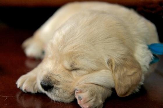 Puppy Fix19