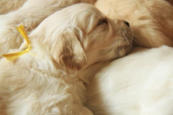 Puppy Fix23