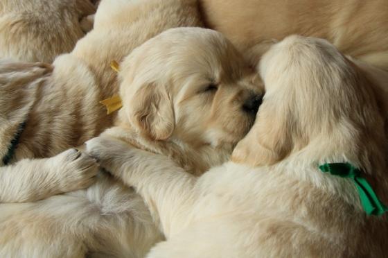 Puppy Fix28