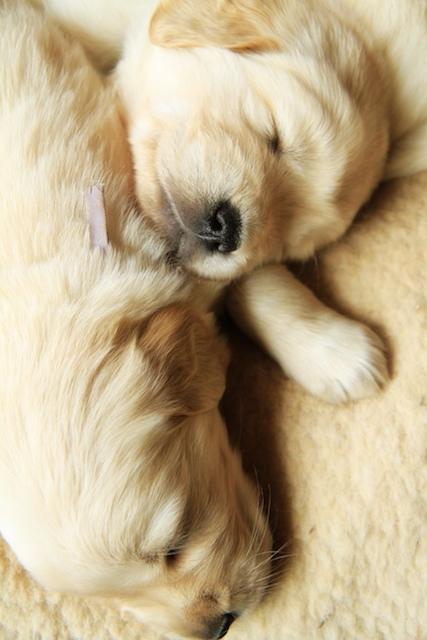 Puppy Fix32