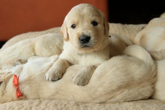 Puppy Fix34