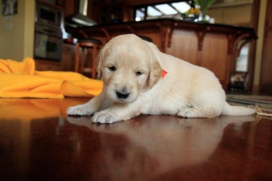 Puppy Fix38