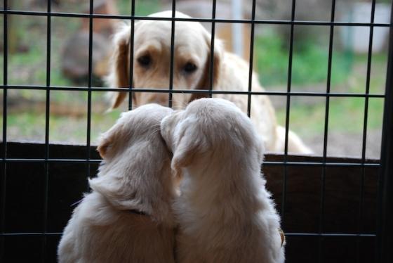 Puppy Fix41