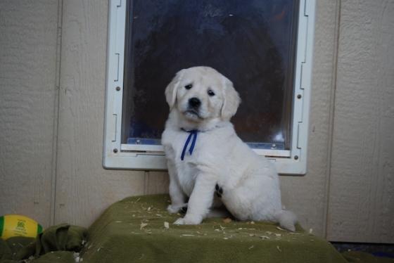 Puppy Fix42