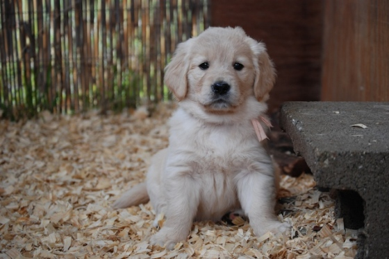 Puppy Fix46