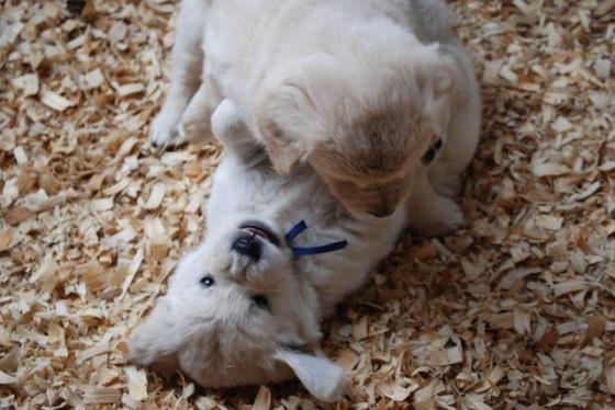 Puppy Fix48