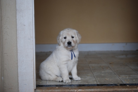 Puppy Fix59