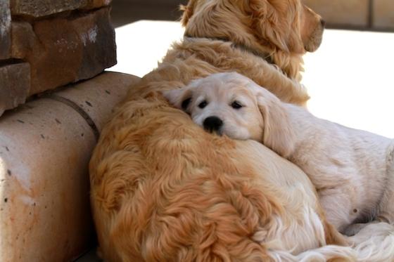 Puppy Fix68