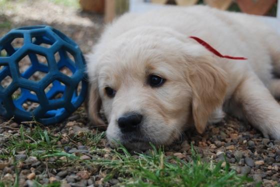 Puppy Fix76