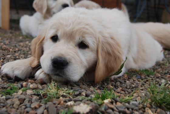 Puppy Fix86
