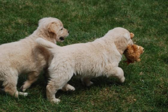 Puppy Fix93