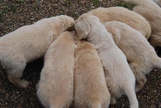 Puppy Fix95