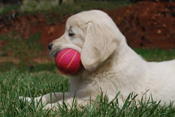 Puppy Fix98