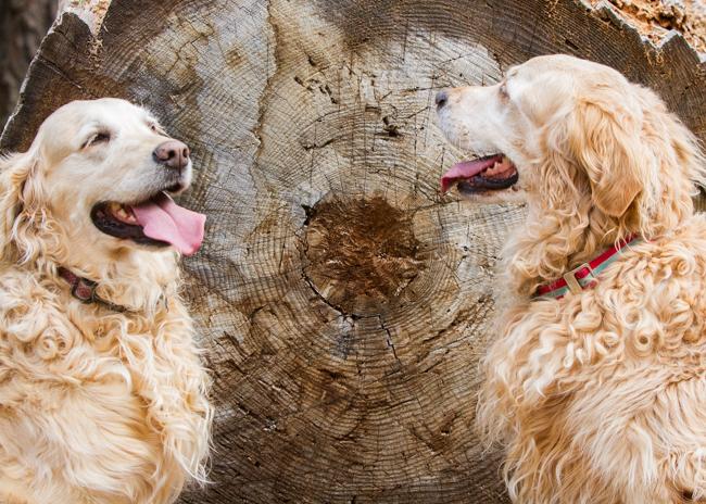 Image Result For Spirit Ranch Dog