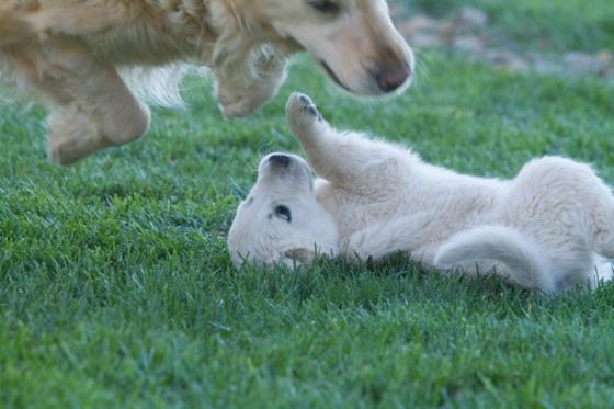 Puppy Fix-15